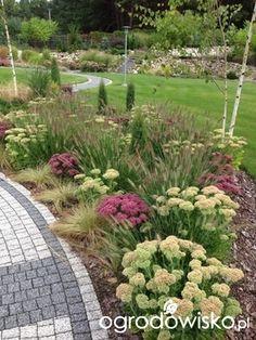 Zielonym do góry... - strona 21 - Forum ogrodnicze - Ogrodowisko