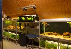 11 great fishrooms to inspire you