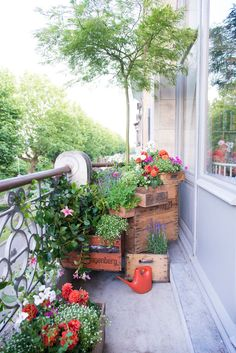 Antwerp || Green balcony with flowers, climbing plants and even a small tree in vintage wooden boxes.