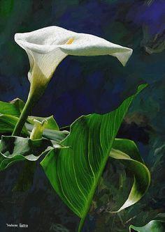 the art of Heloisa Castro, found on Fine Art America.