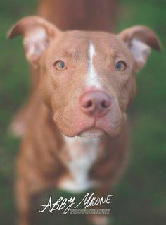 Mittsie Adopted 12/13/13