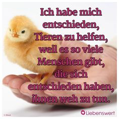 Sprüche für Tierliebhaber I have decided to help animals because there are so many people who have decided to hurt them. The Body Shop, Mother And Baby Animals, Cool Slogans, Vegan Animals, Vegan For The Animals, Animal Cruelty, Animal Rights, Pet Health, Vegan Life
