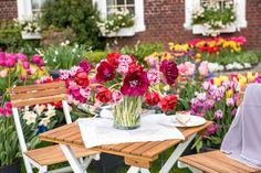 Tulpenpflege nach der Blüte