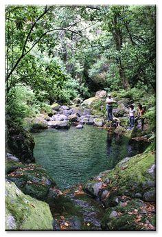 Madeira Walks - Levada Walks