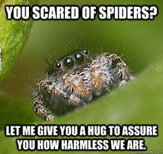 Image result for misunderstood spider