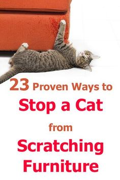 23 Proven Ways To Stop A Cat From Scratching Furniture - Advises To Cat Owners . - 23 Proven Ways To Stop A Cat From Scratching Furniture – Advises To Cat Owners – - Furniture Scratches, Cat Furniture, Cat Scratch Furniture, Cat Hacks, Cat Care Tips, Pet Care, Pet Tips, Kitten Care, Cat Dog