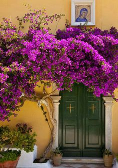 Bougainvillea blossoms over doorway to Greek Orthodox Monastery of the Virgin Mary on Cofu, Greece Beautiful Flowers, Beautiful Places, Corfu Greece, Main Entrance, Doorway, Windows And Doors, Scenery, Around The Worlds, Plants