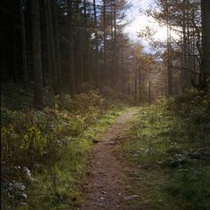 """"""" Forest Path (by osh rees) """""""