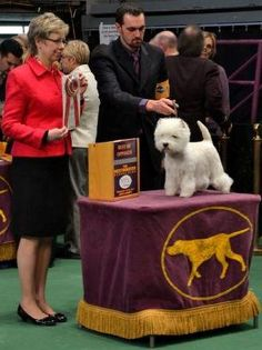 The Westminister Kennel Club Dog Show, NYC.