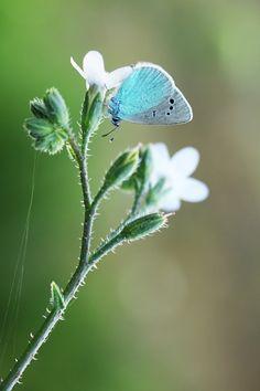 Blue, Mehmet Karaca