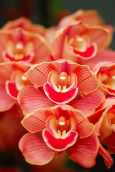 #coral #rojo Color Malibu. Ron de coco Malibu Coral colored orchid