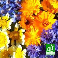 Mélange fleurs comestibles - Graines bio