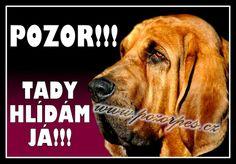 Bloodhound - cedule