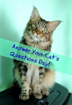 You don't always have to answer questions asked by humans... Today is answer your cat's questions day! Share in comments what your cat asked from you and what did you answer?https://www.daysoftheyear.com/days/answer-your-cats-questions-day/