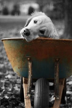 cool photography / touch of color on black and white photo / cute dog picx