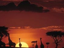Kenya tour from india best kenyan safari tours with air tickets booking affordable prices from India, delhi. Air Ticket Booking, Air Tickets, Kenya, Safari, Tours, India, Sunset, Outdoor, Air Flight Tickets