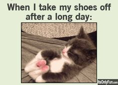 Funny and relatable! Funny Cute, The Funny, Georg Christoph Lichtenberg, Tierischer Humor, Funny Animals, Cute Animals, Just For Laughs, I Love Cats, Crazy Cats