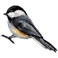 Samolepící obrázek  Americký ptáček