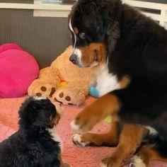 Baby Animals Super Cute, Cute Baby Dogs, Cute Funny Dogs, Cute Dogs And Puppies, Cute Little Animals, Cute Funny Animals, Doggies, Cute Animal Photos, Cute Animal Videos