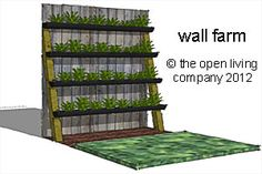 Wall Farm, vertical vegetable garden.  Using ordinary guttering & posts angled against a wall.