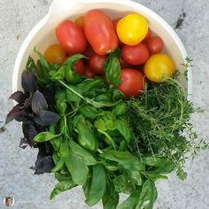 repost via @hagemarie: Mmmmmm... #tomater