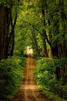 This reminds me of an old dirt road through the bottoms near where I grew up. The trees formed a canopy over the road. You never wanted to take the road after a rain. The Road, Back Road, Country Life, Country Roads, Country French, Country Farm, Cross Country, Country Living, Wow Photo
