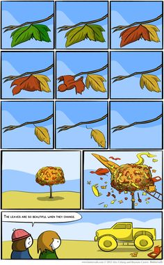 Leaves are so beautiful when they change!