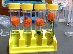 Biology Just-in-Time: Photosynthesis experiment with live plants.