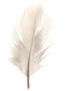 Decorating Your Home in Shades of White Watercolor Feather, Feather Painting, Feather Art, Feather Tattoos, Feather Drawing, Watercolor Art, White Feathers, Bird Feathers, Visage Halloween