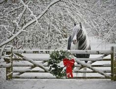 Charming Photos of Winter Scenery – Sherrie Howe Charming Photos of Winter Scenery Country Christmas Pretty Horses, Horse Love, Beautiful Horses, Animals Beautiful, Cute Animals, Simply Beautiful, Christmas Horses, Country Christmas, Christmas Animals