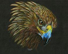 Golden Eagle by lupinemoonfeather on DeviantArt Eagle Art, Golden Eagle, Color Pencil Art, Black Paper, Colored Pencils, Owl, Birds, Deviantart, Drawings
