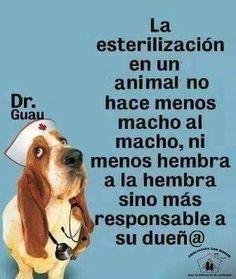 #Frases #Peludos #Mascotas #Perros #Gatos #Cats #Salud #Esteriliza #esterilizarsalvavidas