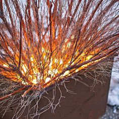 Christmas Light 'Burning Bush' - Light up your winter nights! Lay coiled Christmas light strands on top of soil, then insert branches and dried weeds to create a bush-like appearance