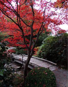 The Japanese Garden - Seattle, WA