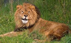 Leo smiling
