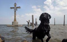 Photographs by Carol Guzy, Pulitzer Prize winner | The Bark
