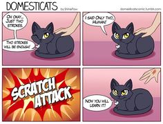 DomestiCats Comics Will Have You Laughing All Day