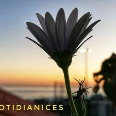 Plants, Instagram, Flora, Plant, Planting