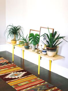 Plants inside on console table