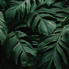 Download wallpaper 2780x2780 leaves, plant, green, dark, vegetation ipad air, ipad air 2, ipad 3, ipad 4, ipad mini 2, ipad mini 3, ipad mini 4, ipad pro 9.7