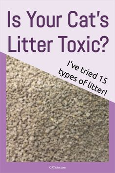 Unfortunately the perfect cat litter doesn't exist. Many cat litters can cause respiratory issues, certain cancers, and some even grow deadly mold! Cats are clean creatuers that deserve a tidy litter box. But the litter you use is just as important as keeping it clean. Check out this analysis of 15 different types of cat litters on the market today. Best Cat Litter, Litter Box, Truth About Pet Food, Different Types Of Cats, Cat Nose, Clumping Cat Litter, Cat Hacks, Cat Sitter, What Cat