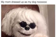 15 Dogs Who Are Clearly The Favorite Child