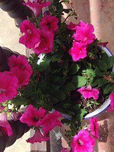 Flores del balcón.