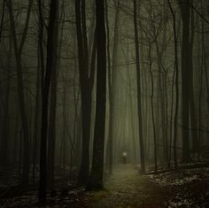 desolation, forest, haunted, nature, spooky