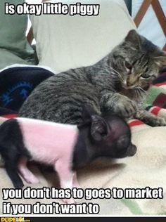 Is Okay Little Piggy http://failnation.tumblr.com