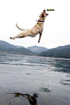 I leap!  I catch!  airborne dog