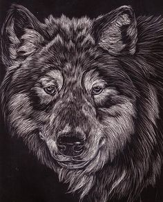 Scratchboard Art | There is something about black and white that i just love! its ...