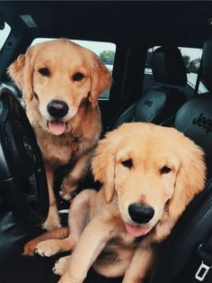 "Explore our web site for even more relevant information on ""golden retriever pup"". It is actually an excellent spot to learn more. Animals And Pets, Baby Animals, Funny Animals, Cute Animals, Funny Animal Photos, Cute Dogs And Puppies, I Love Dogs, Doggies, Retriever Puppy"