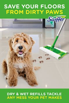 Swiffer Sweeper Pet Kit has Dry and Wet refills to tackle all your pet messes. The Dry cloth traps and locks hair, and the Wet cloth takes care of the stuff your pet drags in. Check out a some of our amazing Featured Cane Corso Breeds we Love! Animals And Pets, Baby Animals, Cute Animals, Diy Home Cleaning, Cleaning Hacks, Grill Cleaning, Cute Dogs, Cute Babies, French Country Bedrooms