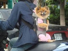 Found Shit » Puppy Carrier : Funny, Bizarre, Amazing Pictures & Videos